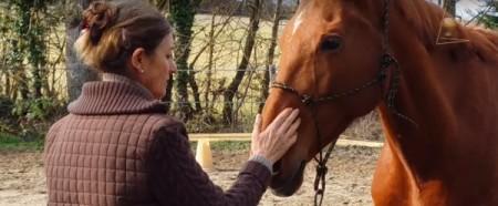 Reportage vidéo sur l'éthologie du cheval