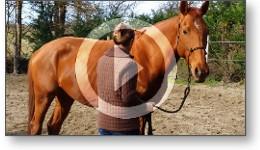 Reportage vidéo d'une séance d'éthologie sur un cheval de course