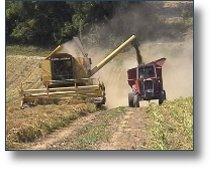 Vidéo de présentation de la production de semences de betteraves