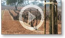 Film de présentation du domaine vinicole Barsalou