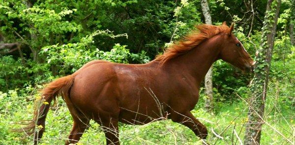 Site web de randonnées à cheval